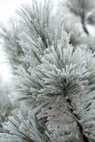 The winter impression Stock Image