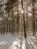 Winter In Forest Royalty Free Stock Images