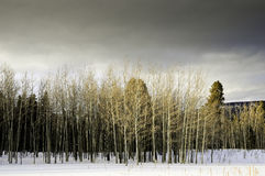Winter In New Mexico Stock Photo
