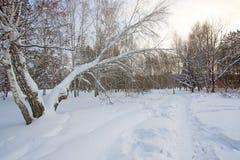 Winter In Park Stock Image