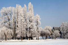 Free Winter In Park Royalty Free Stock Photo - 7470015