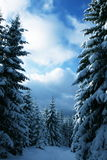 Winter In The Forest Royalty Free Stock Images