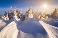 Winter In The Mountain Forest Royalty Free Stock Photo