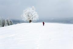 Winter inclement snowy landscape Stock Photos