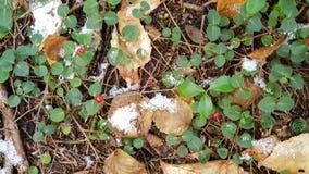 Winter& x27; inizio di s immagine stock