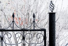Winter iron fence Stock Image