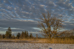 Winter in Isarwinkel Royalty Free Stock Image