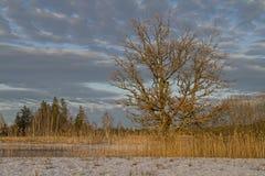 Winter in Isarwinkel Stock Photo