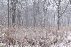 Winter ist gekommen Schneefälle im Wald Stockfotos