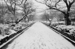 Winter in Japan Royalty Free Stock Image