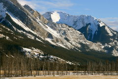 Winter in jasper, canada. Jasper national park, alberta, canada, dead frozen forest below the mountains Stock Photography