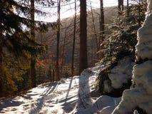 Winter in jizerske hory ridge in czech republic Stock Image
