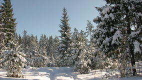 Winter jogging Stock Images