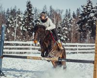 Winter jump horse ride jumping Royalty Free Stock Image