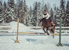 Winter jump horse ride jumping Royalty Free Stock Photography