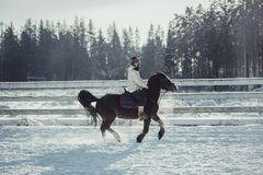 Winter jump horse ride jumping Royalty Free Stock Photo