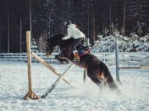 Winter jump horse ride jumping Royalty Free Stock Images
