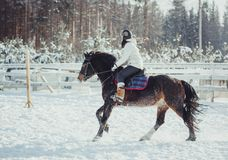 Winter jump horse ride jumping Stock Image