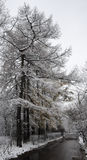 Winter is just begin in the park. A snowy trees in a park and and a near path track stock photography