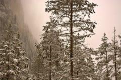 Winter kam in die Berge lizenzfreie stockfotos