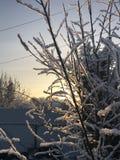 Winter kamen und zaprosili Niederlassungen stockfotografie