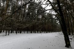 Winter in Kampinos National Park. Leszno, Poland Royalty Free Stock Images