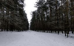 Winter in Kampinos National Park. Leszno, Poland Royalty Free Stock Photography