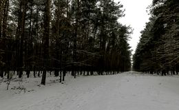 Winter in Kampinos National Park. Leszno, Poland Stock Images