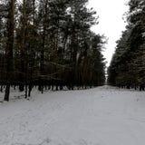 Winter in Kampinos National Park. Leszno, Poland Royalty Free Stock Photo