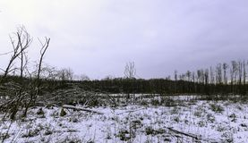 Winter in Kampinos National Park. Leszno, Poland Stock Image