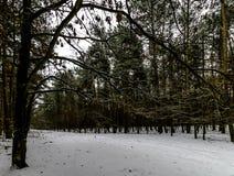 Winter in Kampinos National Park. Leszno, Poland Royalty Free Stock Image