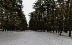 Winter in Kampinos National Park. Leszno, Poland Stock Photo