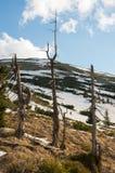 Winter in the Karkonosze Mountain. Stock Image