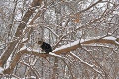 Winter-Katze auf einem Baum Stockbilder