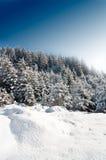 Winter-Kiefer lizenzfreie stockfotos