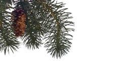 Winter-Kiefer-Hintergrund oder Rand Stockfotografie