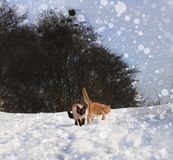 Winter kittens in the snow royalty free stock photos