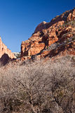 Winter in Kolob Canyon. With dramatic red rocks, blue sky, and bare trees Stock Photo