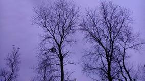 Winter kommt Stockbilder