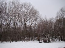 Winter kommt in den Wald stockfoto