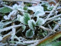 Winter kommt - weißer Frost auf grünem Gras Stockbild