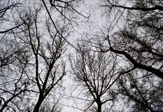 Winter krone of trees in black-and-white color royalty free stock photography
