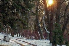 Winter Kurvenreiche Straße im Park Stockfoto