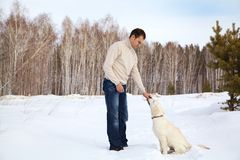 Winter Labrador retriever with owner Royalty Free Stock Images