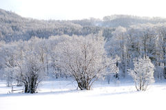 The Winter lace. Royalty Free Stock Photography