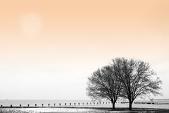Winter by the Lake. Winter scene with trees by the lake Stock Images