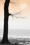 Winter by the Lake. Winter lake scene with squirrel on tree branch royalty free stock photography