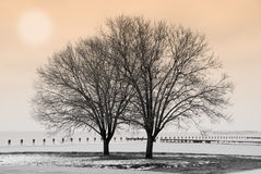 Winter by the Lake. Winter scene with trees by the lake Royalty Free Stock Images