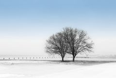 Winter by the Lake. Winter scene with trees by the lake stock photos