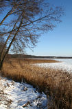 Winter lake. Lake and waterside in winter Stock Images